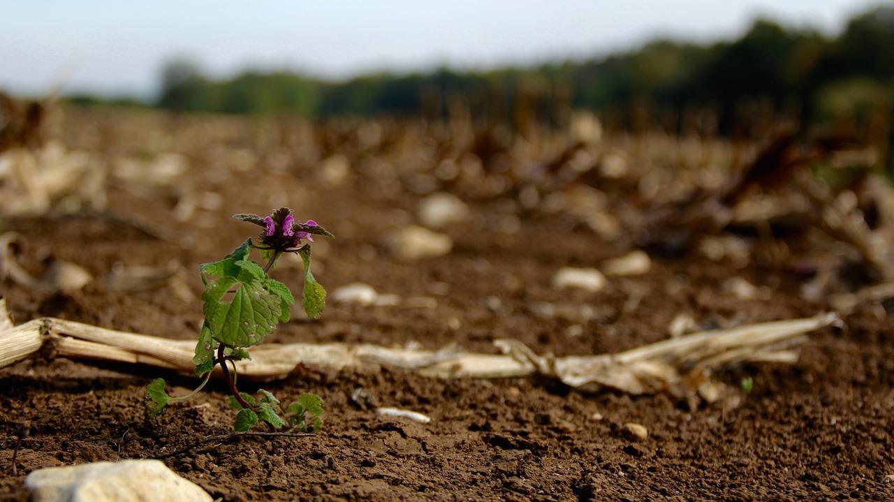 mud ground earth flower