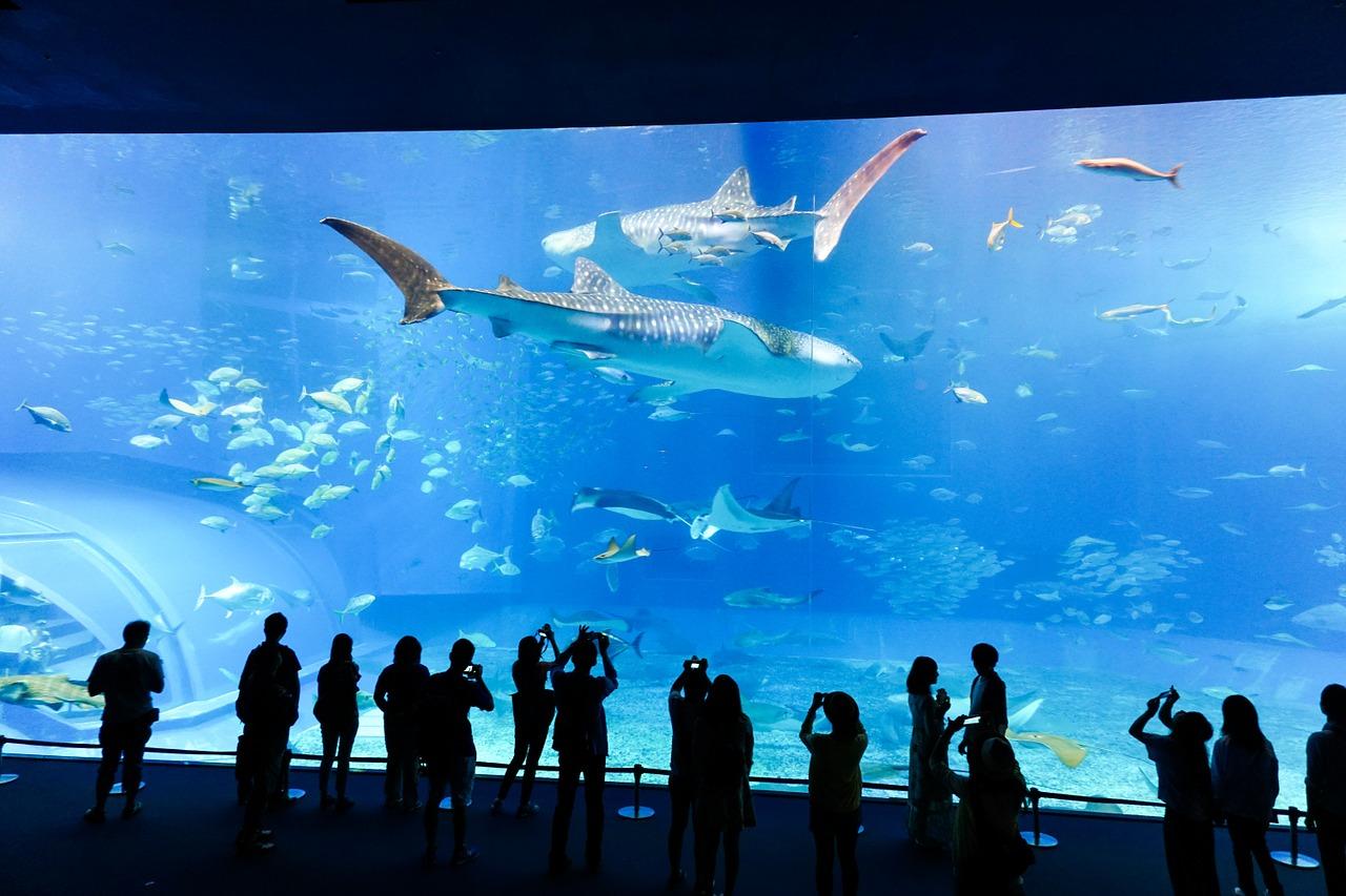 aquarium giant fish tank
